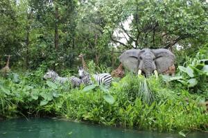 jungle XTNT
